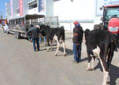 Se alista Nave Ganadera para la exhibición de ganado menor esta semana en el Ecocentro Expositor